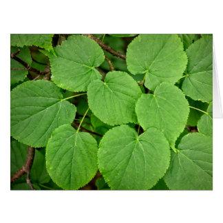 Lime tree leaves card