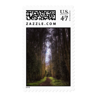 Lime Tree Path Postage Stamp