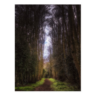 Lime Tree Path Post Card