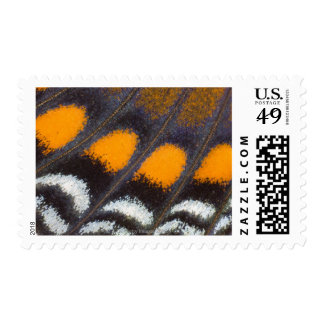 Limenitis a. astyanax male north american postage