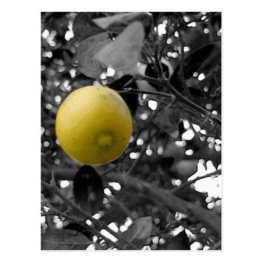 Limón blanco y negro postal