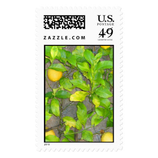 Limone Postage Stamp