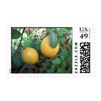 Limones de Myers Sellos