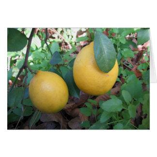 Limones de Myers Tarjeta De Felicitación