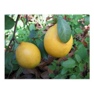 Limones de Myers Tarjetas Postales