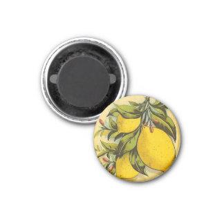 Limones deliciosos imán redondo 3 cm