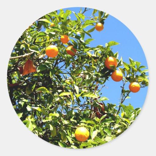 Limones Etiqueta Redonda