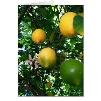 Limones Tarjeta Pequeña