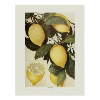 Limones Tarjeta Postal