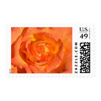 Limones y sellos del rosa de los naranjas