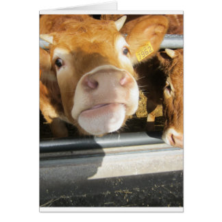 Limousin Brown Cow Card