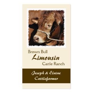 Limousin bull in a halter business card
