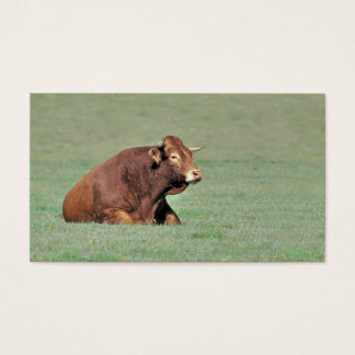 Limousin bull lying in a field business card