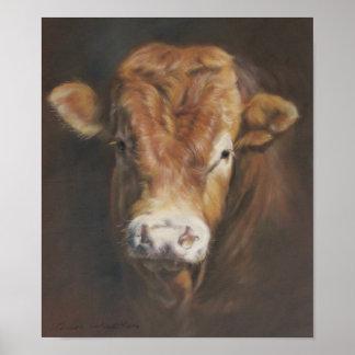 Limousin Bull Poster