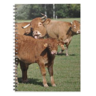 Limousin calf and cows notebook