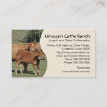 Limousin cattle farm or ranch business card