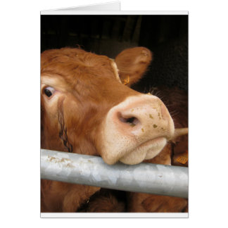 Limousin Cattle (Mad Cow) Card