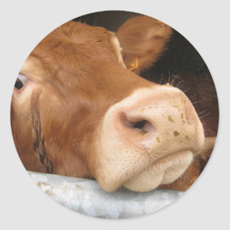Limousin Cattle (Mad Cow) Classic Round Sticker