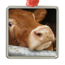 Limousin Cattle (Mad Cow) Metal Ornament