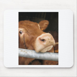 Limousin Cattle (Mad Cow) Mouse Pad