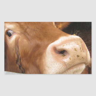 Limousin Cattle (Mad Cow) Rectangular Sticker
