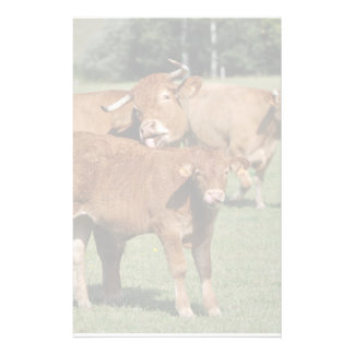 Limousin cow and calf customized stationery