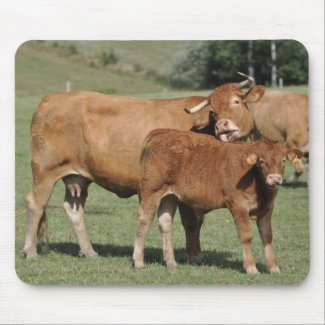 limousin cow and calf mousepad mousepad
