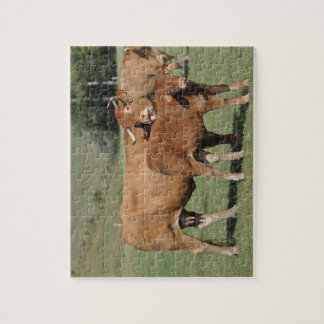 Limousin cow and calf jigsaw puzzle