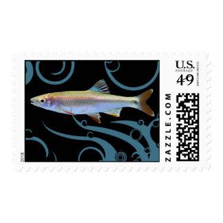 Limpiabotas de Tricolored Sello Postal