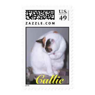 Limpieza de Callie Franqueo