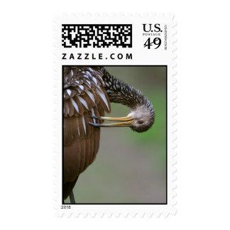 Limpkin Stamp