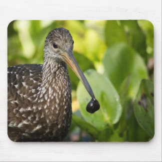 Limpkin with Snail Mouse Pad