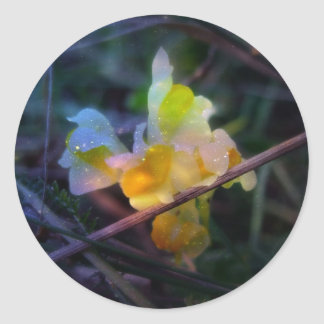 Linaria Glow Stickers