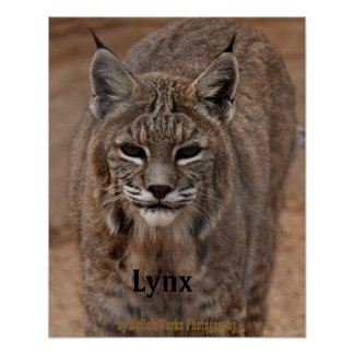 Lince 5214 póster