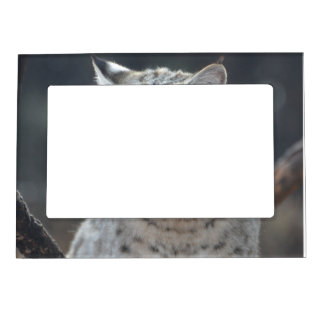 Lince adorable marcos magnéticos de fotos