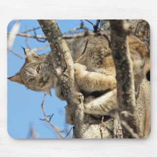 Lince dañoso mouse pad