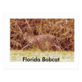 Lince de la Florida Postal
