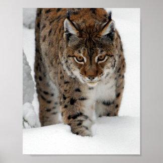 Lince de la nieve posters