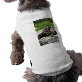 Lince del bebé camiseta de perro