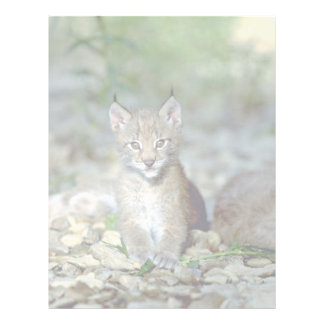 Lince eurasiático, gatito joven plantilla de membrete