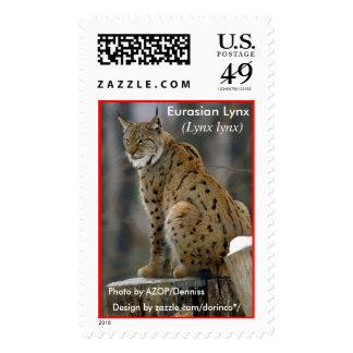 Lince eurasiático (lince del lince) 1 sello