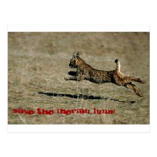 LINCE IBÉRICO, Save the Iberian Lynx! Tarjetas Postales
