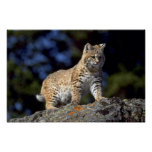 Lince Impresiones