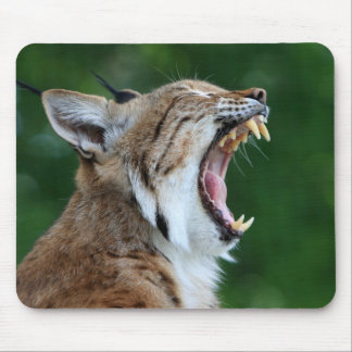 Lince, mousepad hermoso de la foto del lince alfombrilla de ratones