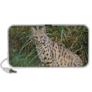 Lince (rufus del Felis) iPod Altavoces