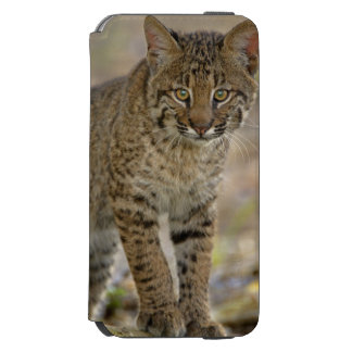 Lince, rufus del Felis, humedales de Funda Billetera Para iPhone 6 Watson
