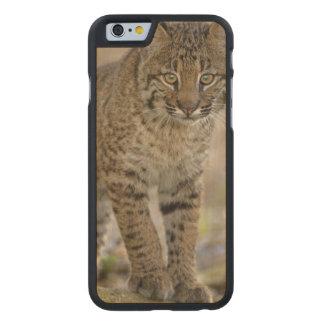 Lince, rufus del Felis, humedales de Funda De iPhone 6 Carved® De Arce