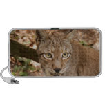 lince siberiano 032 altavoces