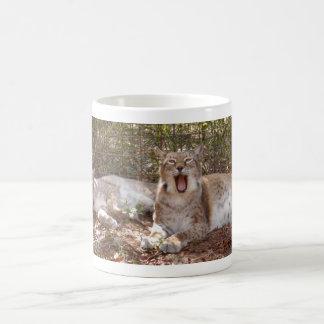 lince siberiano 037 tazas de café