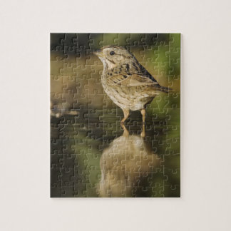Lincoln's Sparrow, Melospiza lincolnii, adult 2 Jigsaw Puzzle